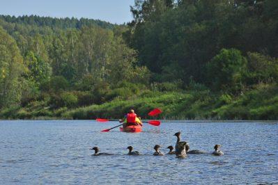 Kayak-tours-Kayakverleih-Brasla-Gauja-paseos-en-kayaks-alquiler-Letonia-Lettland-Latvia